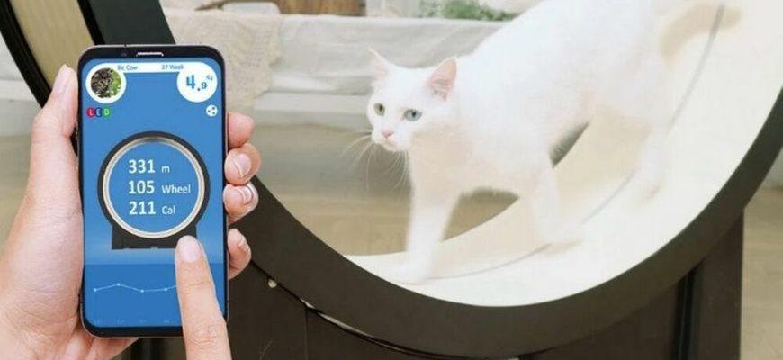 Умная электроника для домашних питомцев — OnLime Блог
