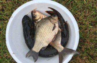 ТОП-10 лучших гаджетов для рыбалки поможет вам выбрать необходимый сонар - Гаджеты. Технологии. Интернет - медиаплатформа МирТесен